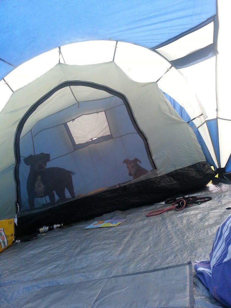 Dogs in a tent!