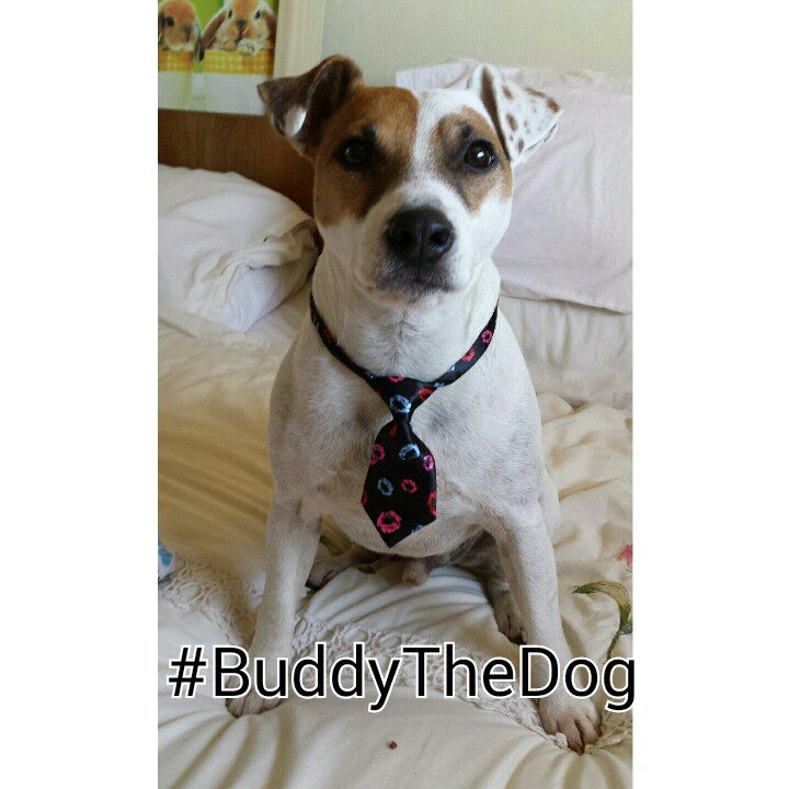 Buddy the dog