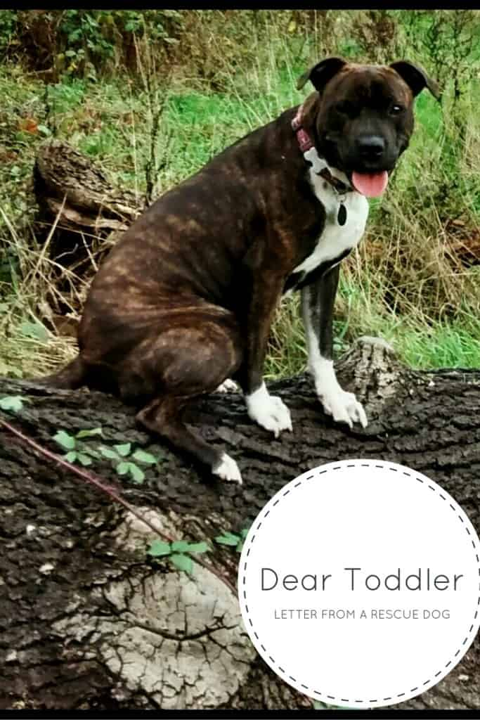 Dear Toddler