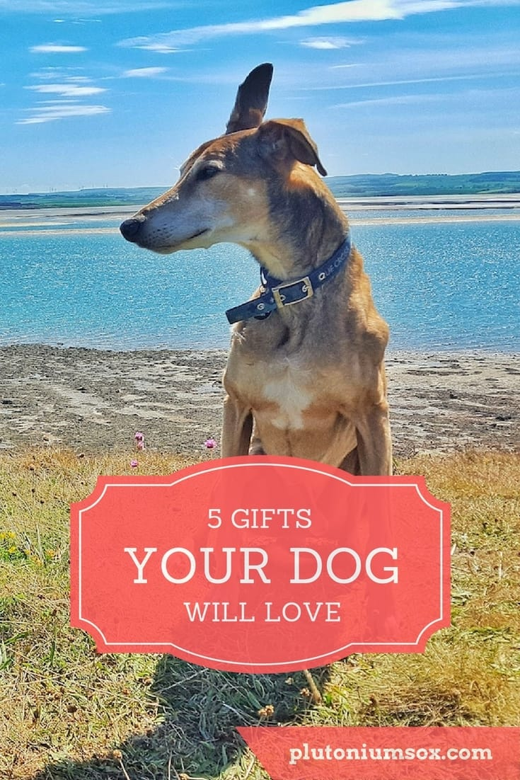 Gifts for dogs   If you own a dog or you're a dog lover, you probably want to treat your pooch to a gift every now and then. After all, pets are part of the family aren't they? Here are five gifts your canine friend will love. There are ideas to suit dogs of all ages too, from a bouncy young pup to a pampered old dog.