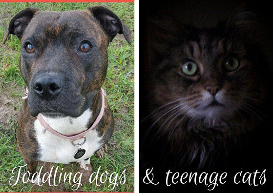 Toddling dogs and teenage cats
