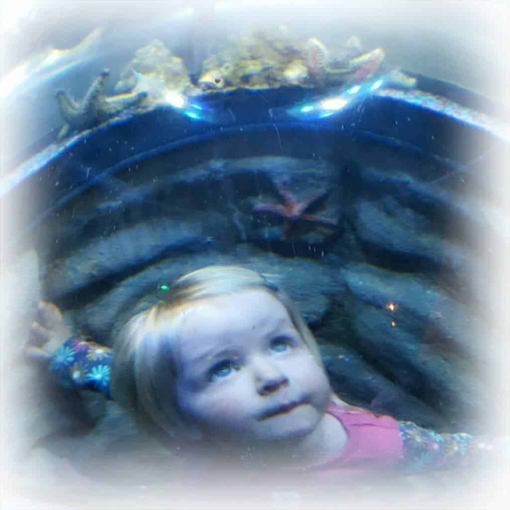 A review of the National Sea Life Centre Birmingham and the Mister Maker Event