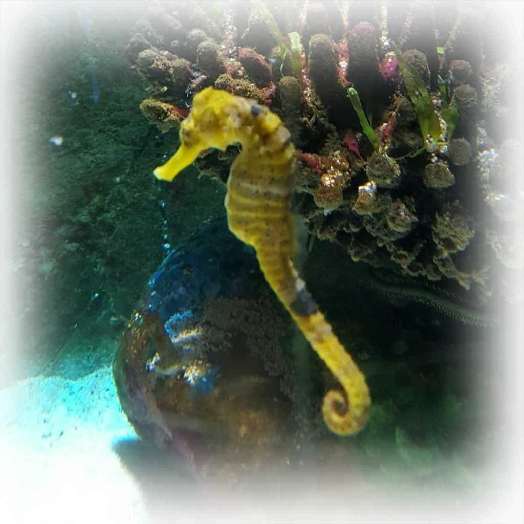 A review of the National Sea Life Centre, Birmingham and the Mister Maker Event