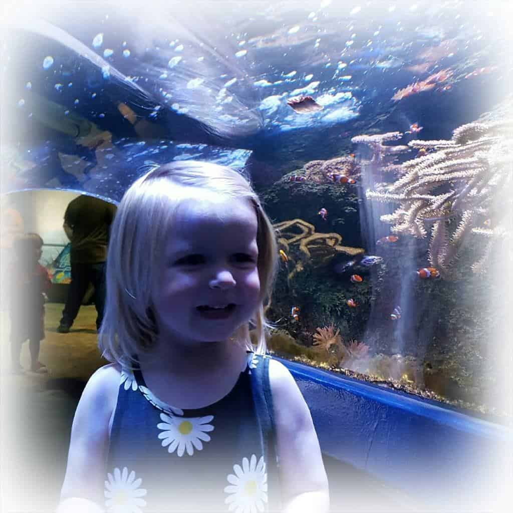 National Sea Life Centre: 20 year anniversary
