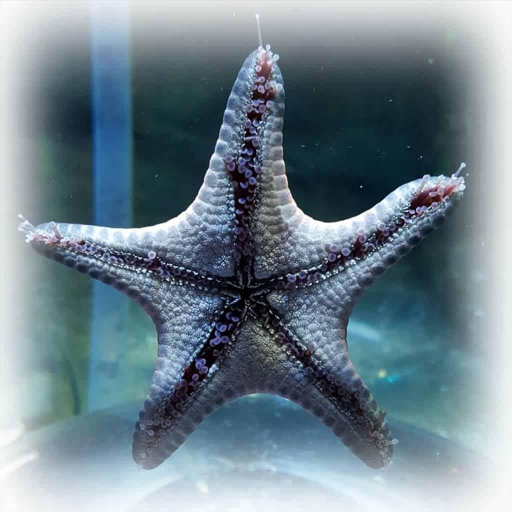 National Sea Life Centre: 20 year anniversary