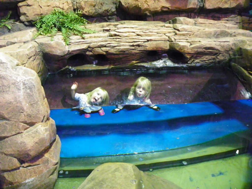 The day we found Dory at Sea Life Birmingham