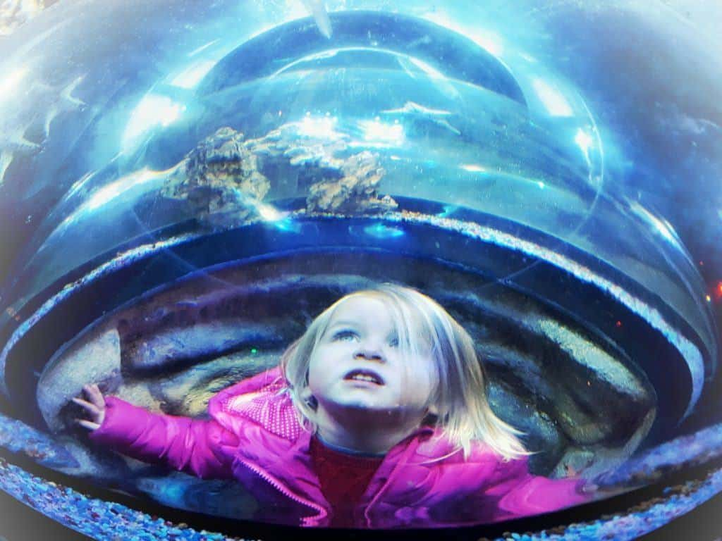 National Sea Life Centre Birmingham Meet Santa