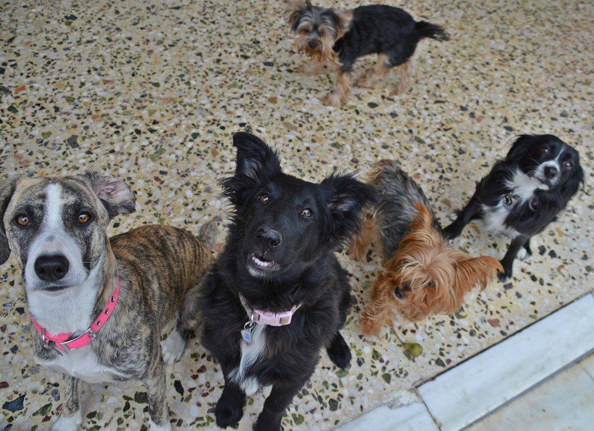 Interviews With Pets Chapter 7 - Debbie's Menagerie