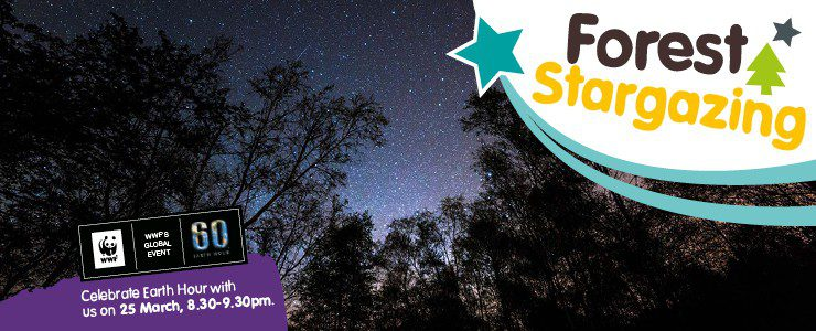 Stargazing with the Forestry Commission