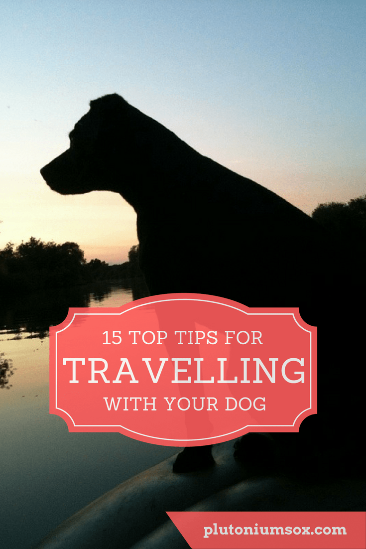 Pets | Dogs are part of the family. So when you go on holiday, it makes perfect sense that you would want to take your canine friend with you. Here are 15 tips for making sure both you and your pooch have a fantastic trip whether you travel in the UK or abroad.
