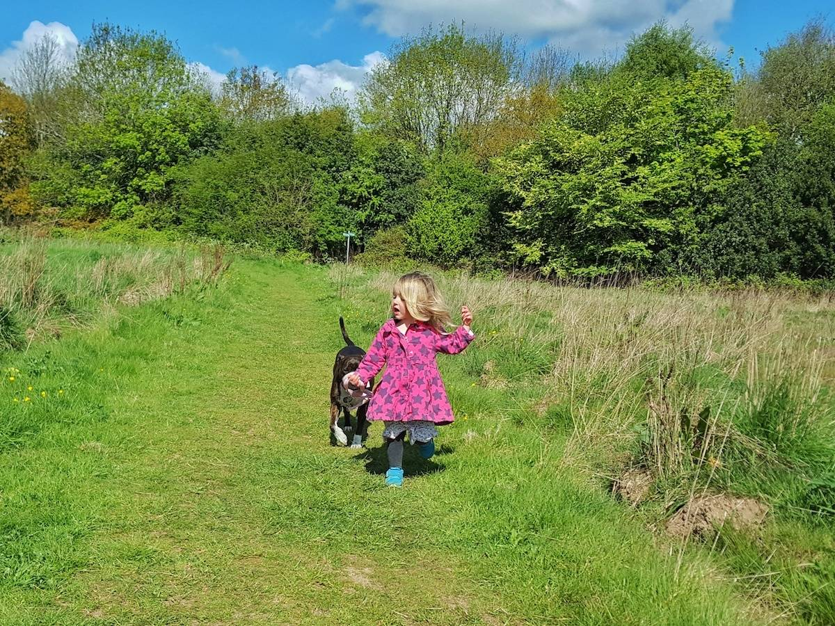 A review and giveaway of Meg Heath bespoke dog leads and collars