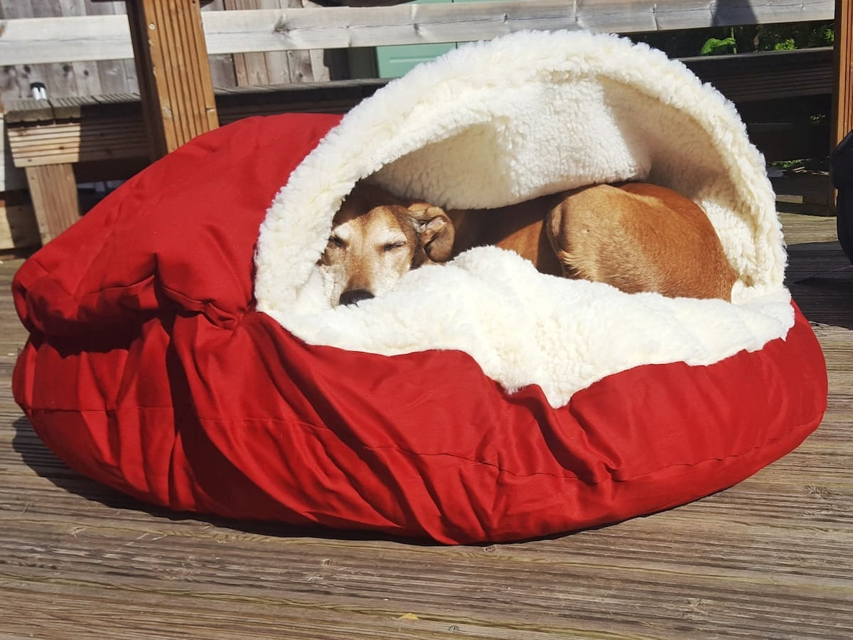 Snoozer UK make a range of products for dogs. The cozy cave is a warm, cosy, washable dog bed that is so appealing I've emailed them to ask if they'd think about making one for humans!