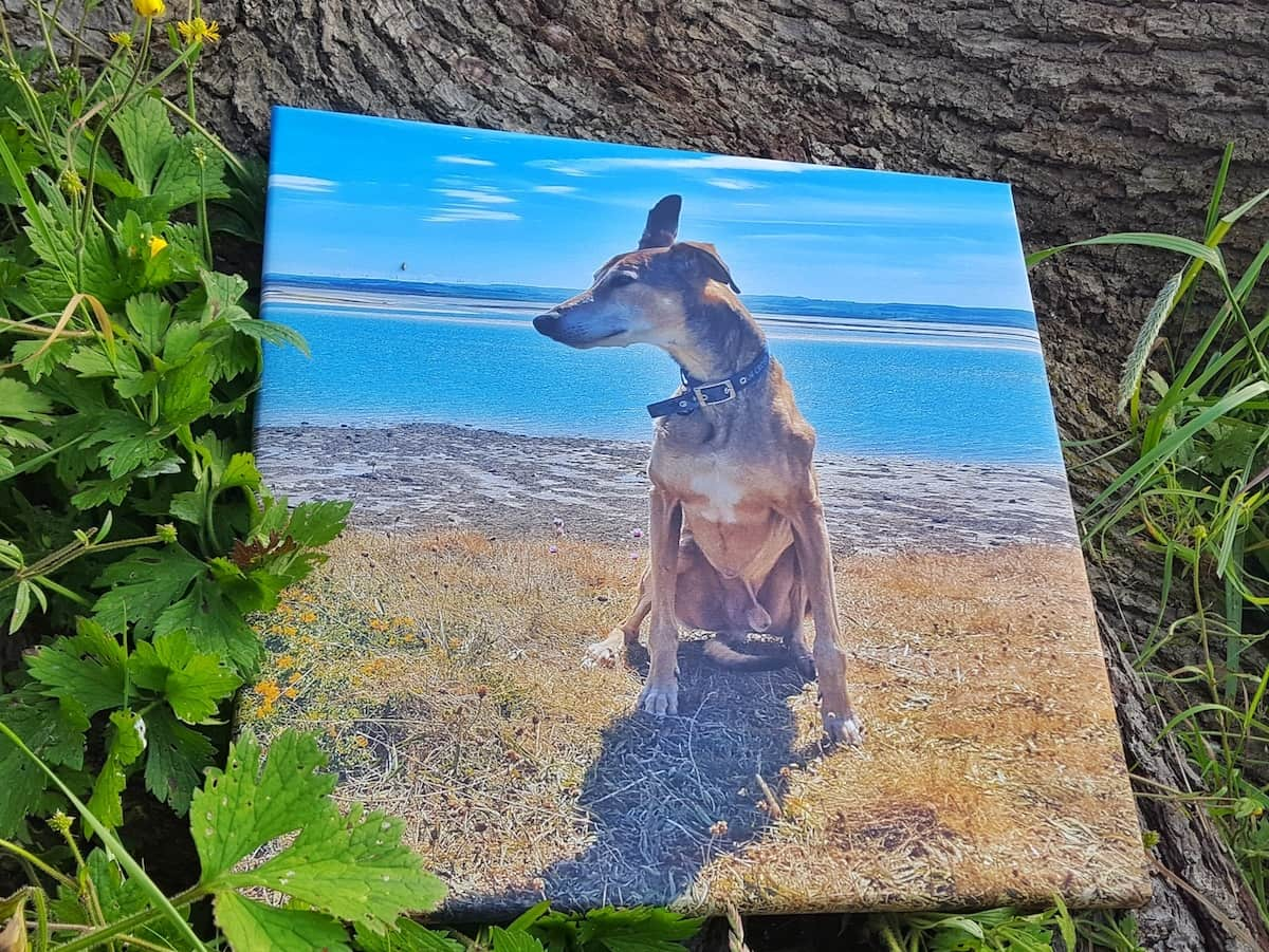 Cheerz photo canvas review