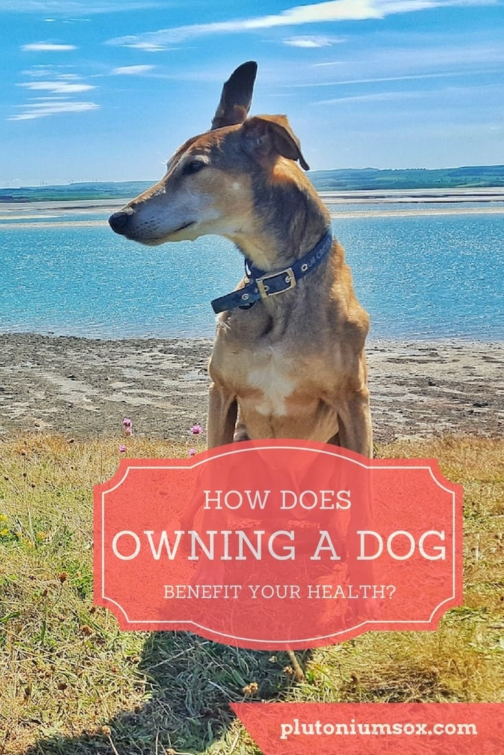 Why get a dog? Well if you value your health, want to move more, get fit, get plenty of exercise and improve your mental health, a rescue dog might be just what you need.