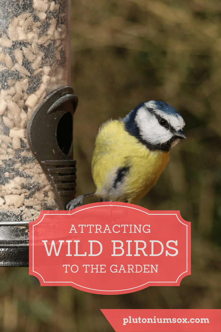 Attracting wild birds to the garden is a great way for children to learn about bird identification. It can teach them a sense of responsibility towards wildlife and using a bird feeder to feed bird seed or other appropriate nutrients can provide the birds with nutrition to see them throughout the winter.
