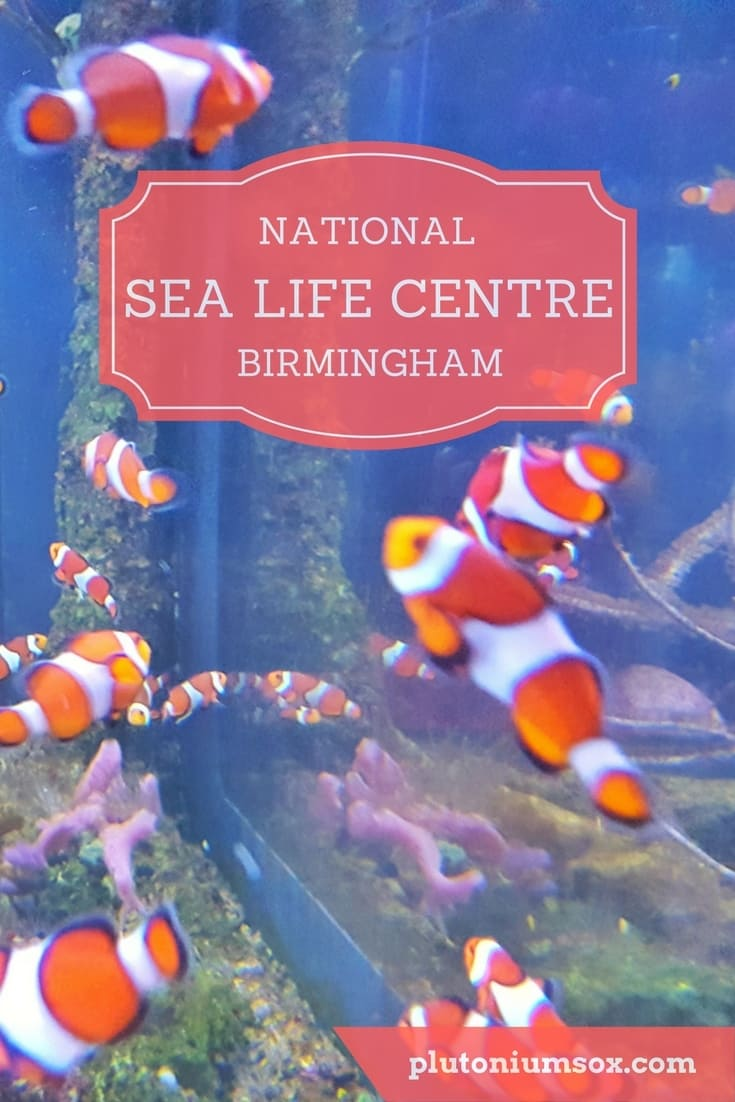 National Sea Life Centre, Birmingham, West Midlands. If you are looking for a day out in the West Midlands for children of any age, the National Sea Life Centre in Birmingham would be a great option, particularly for a rainy day. There are fish, penguins and otters and you can watch a film in the 4D cinema. Families will all find something they enjoy from walking through the huge ocean tunnel to touching star fish in the hands on rock pool area. My kids love it every time we go despite going several times a year.