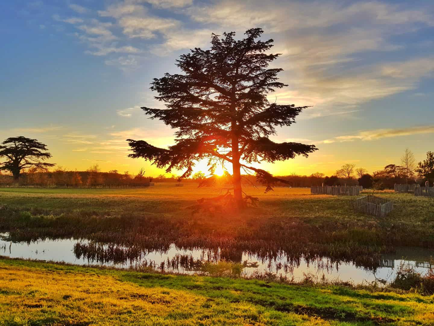 Tree on the National Trust Croome Estate with river in foreground reflecting the sunset and the tree