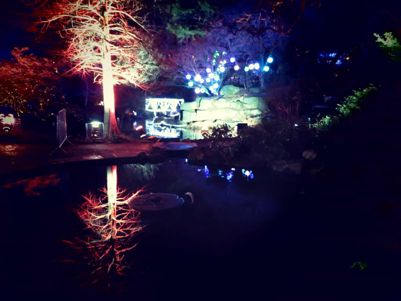An illuminated tree is reflected in the water of a small pond