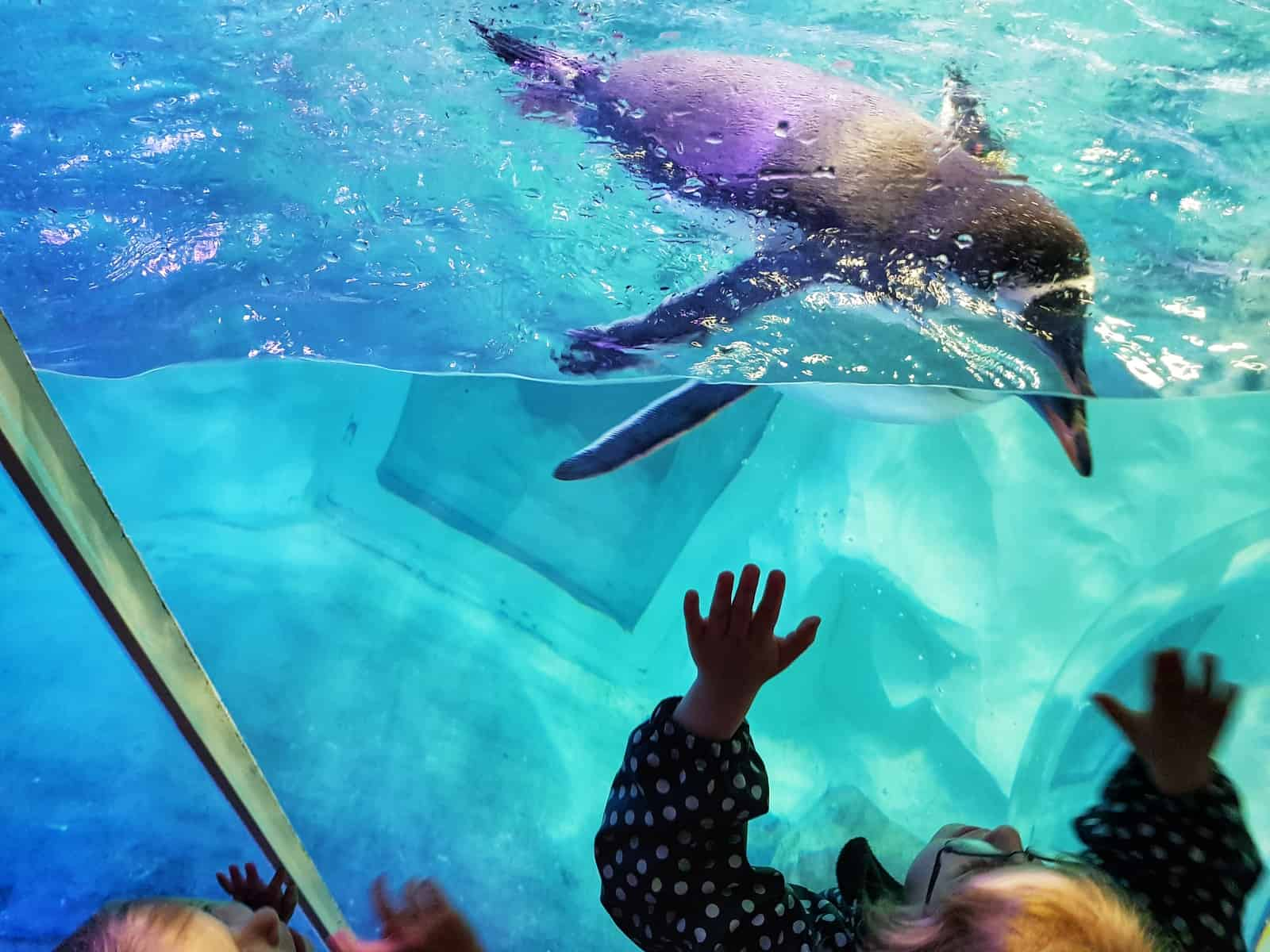 A child leaning up against the glass where a penguin swims in the water above her.