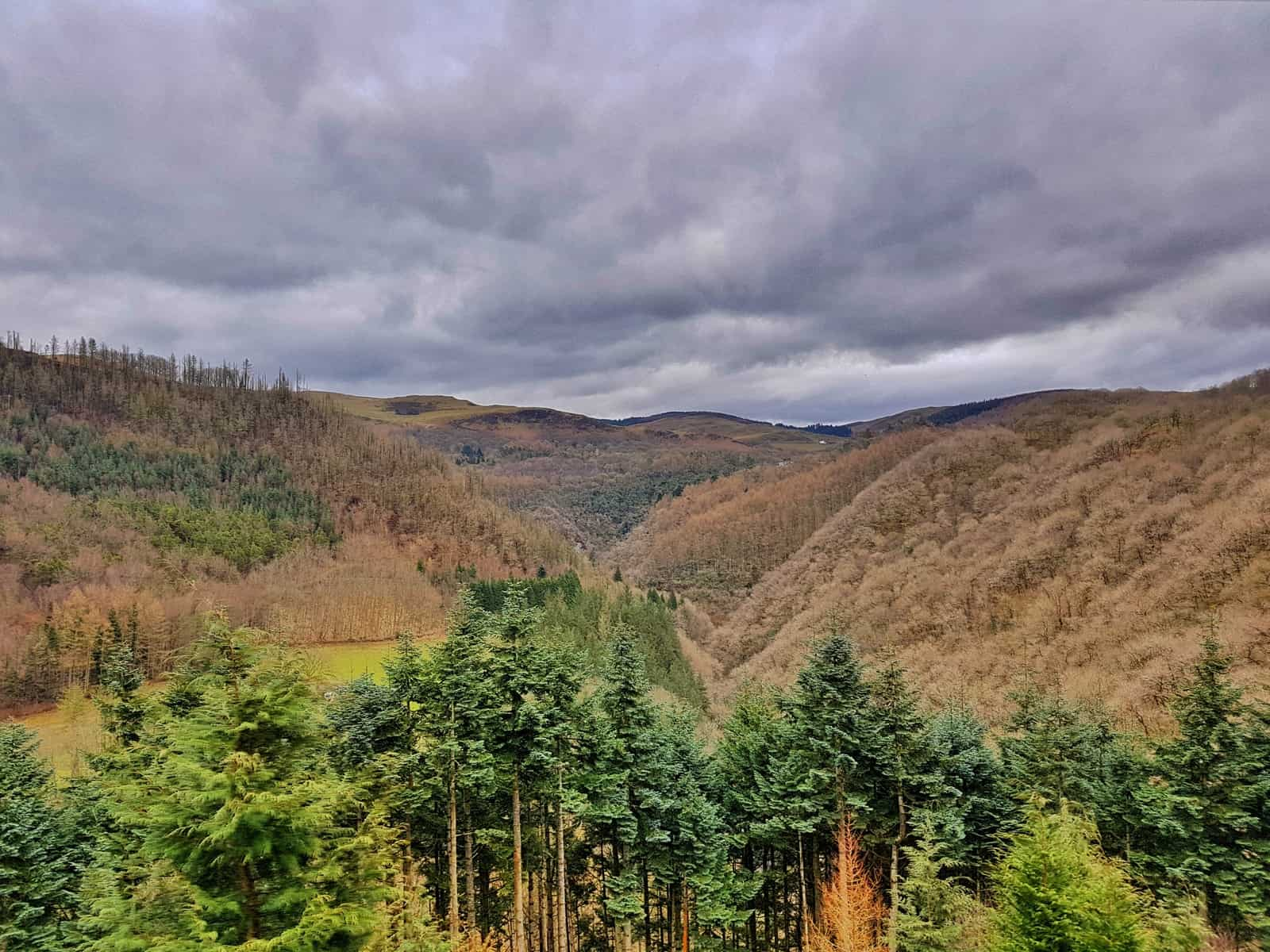 Trees in foreground with hills in background and clouds overhead - view from Vale of Rheidol Railway