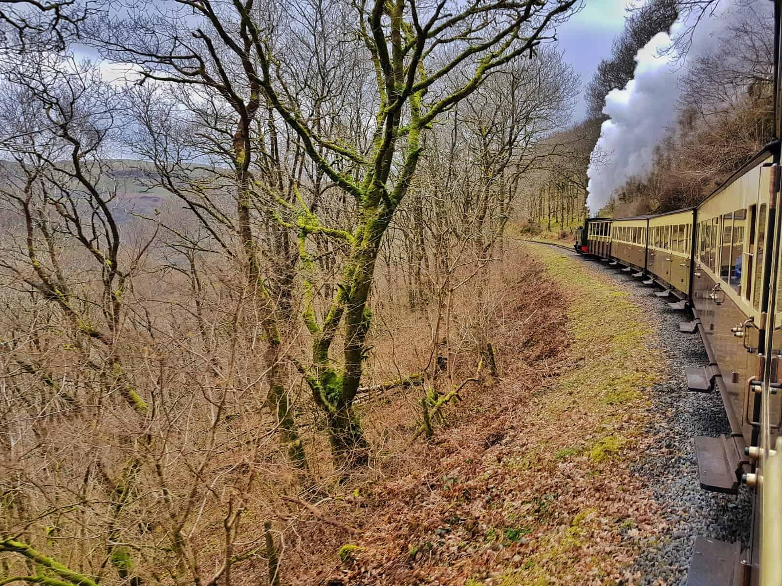 Steam train with steam puffing from engine on the Vale of Rheidol Railway