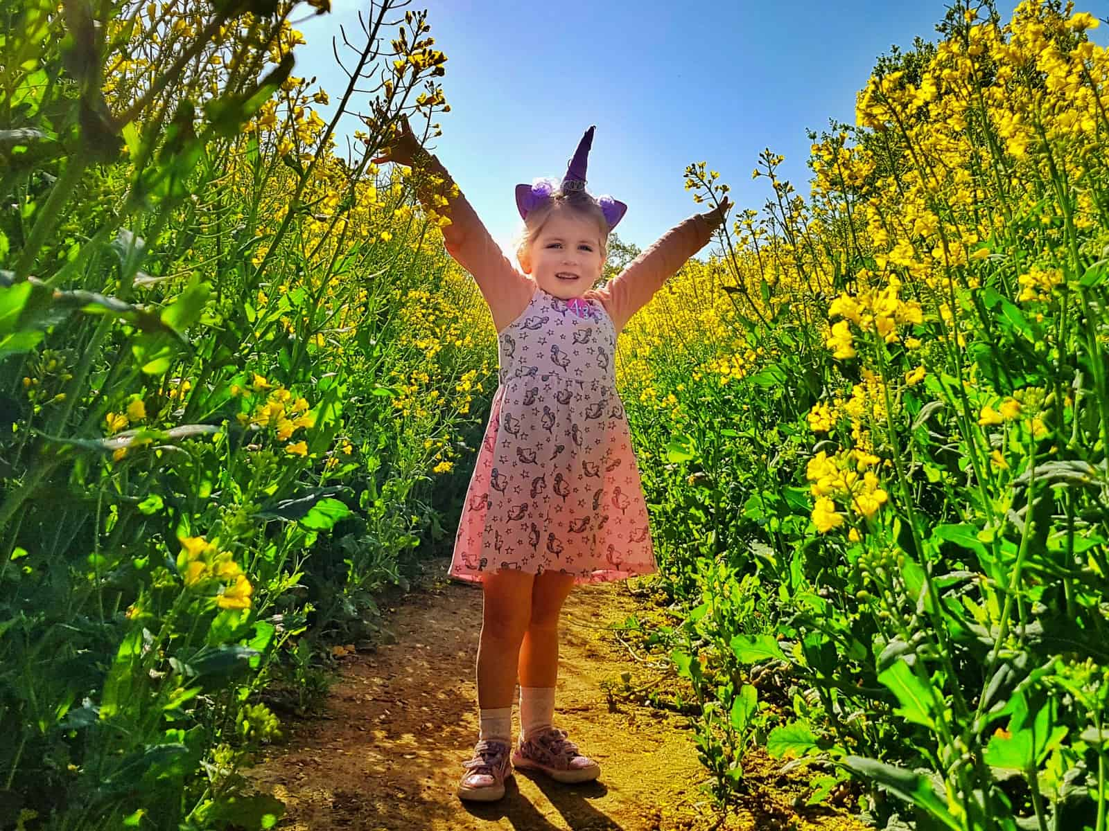 Little girl with unicorn horn hairband on standing in a field of oilseed rape