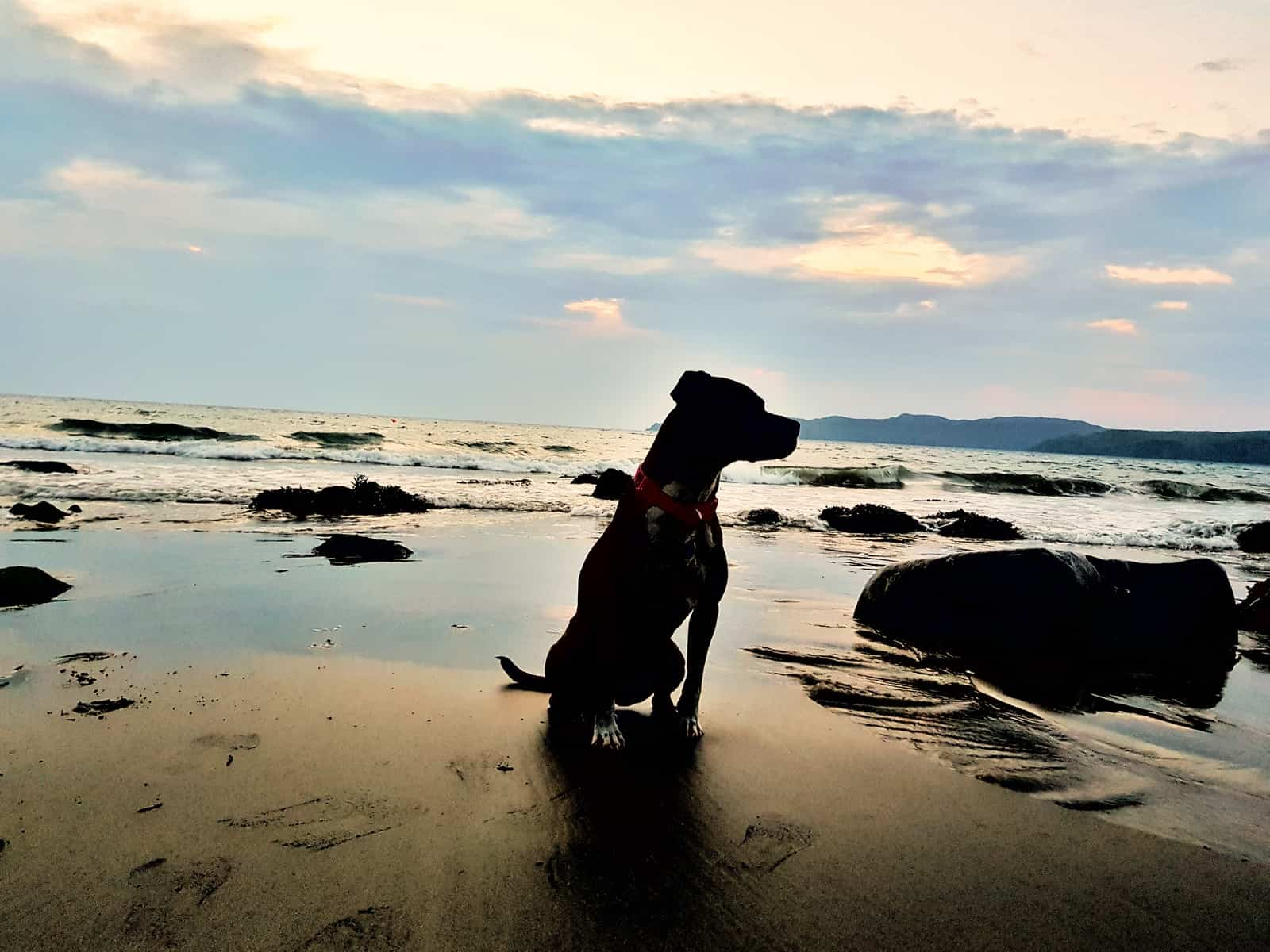 Silhouette of a dog sitting on a beach at an open water swimming spot in Pembrokeshire