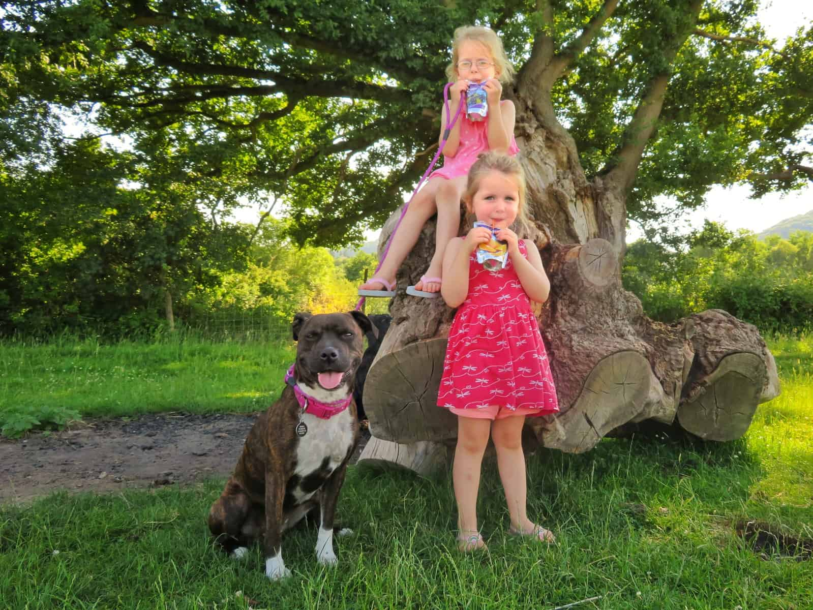 Girl sat on a log with her sister stood in front of her and a dog on the lead beside them, all smiling including the dog - girls drinking Capri-Sun
