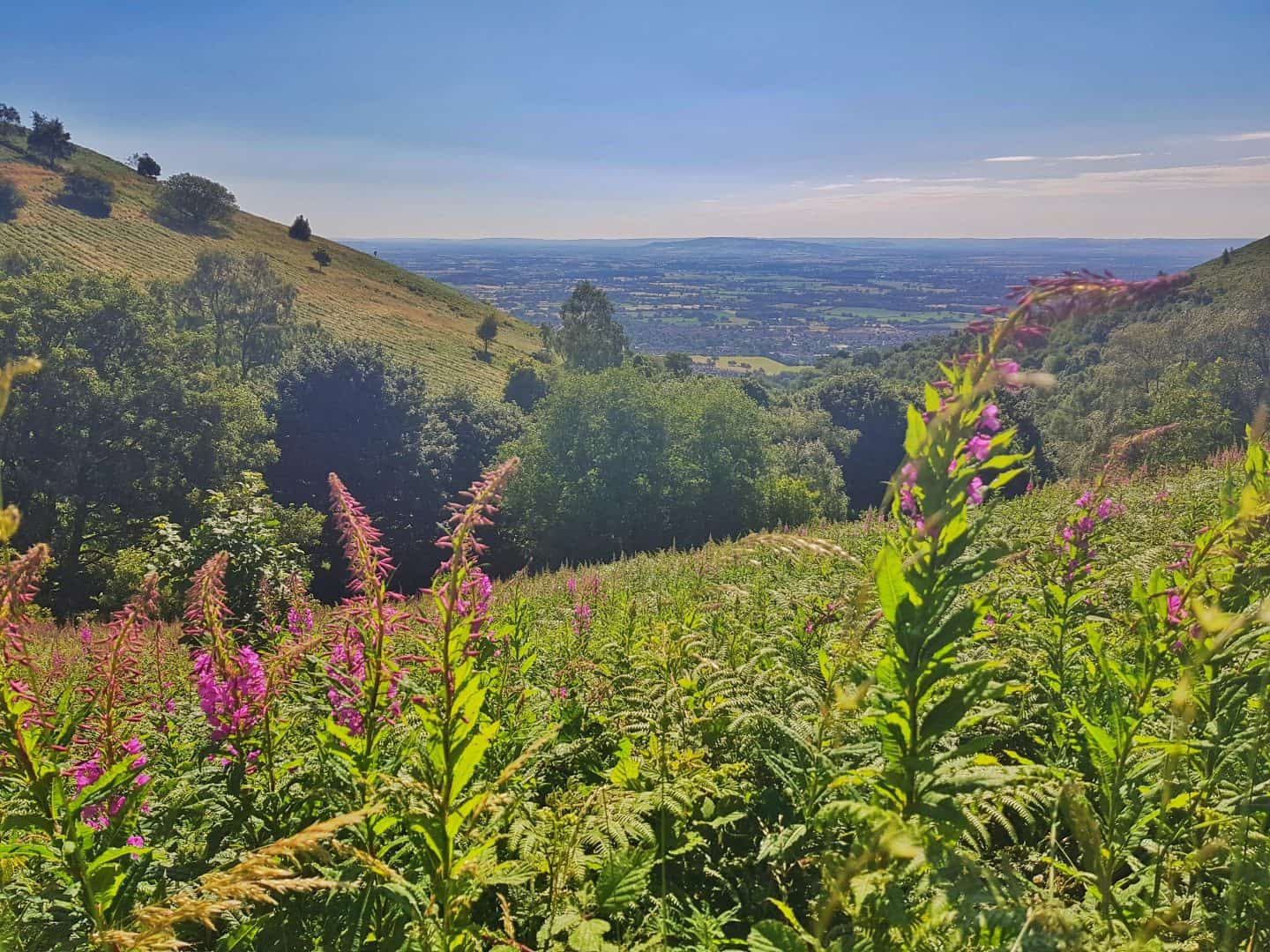 Pink flowers in the foreground with hillsides and a view across Worcestershire in the background
