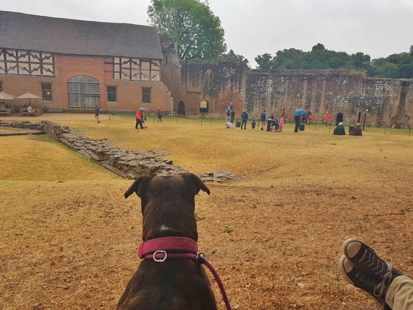 Kenilworth Castle Warwickshire dog watching show