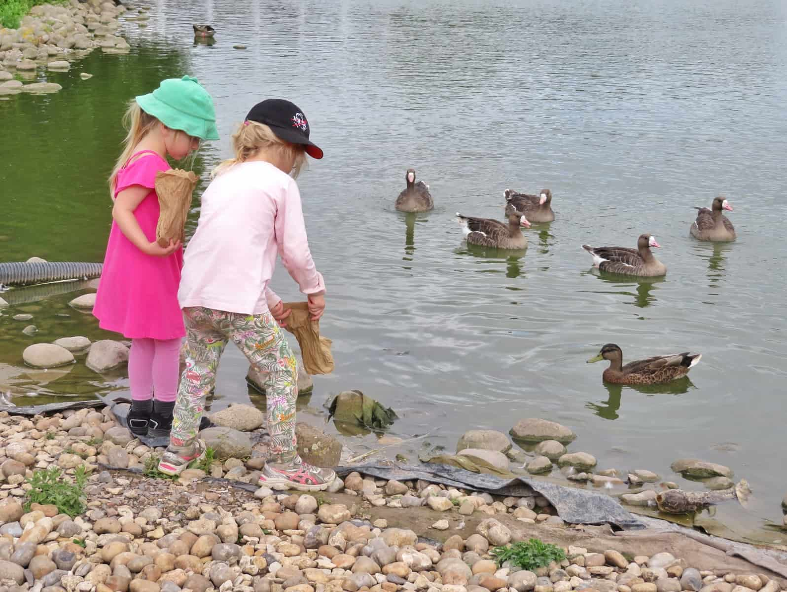 WWT Slimbridge, Gloucestershire - two little girls feeding ducks and geese