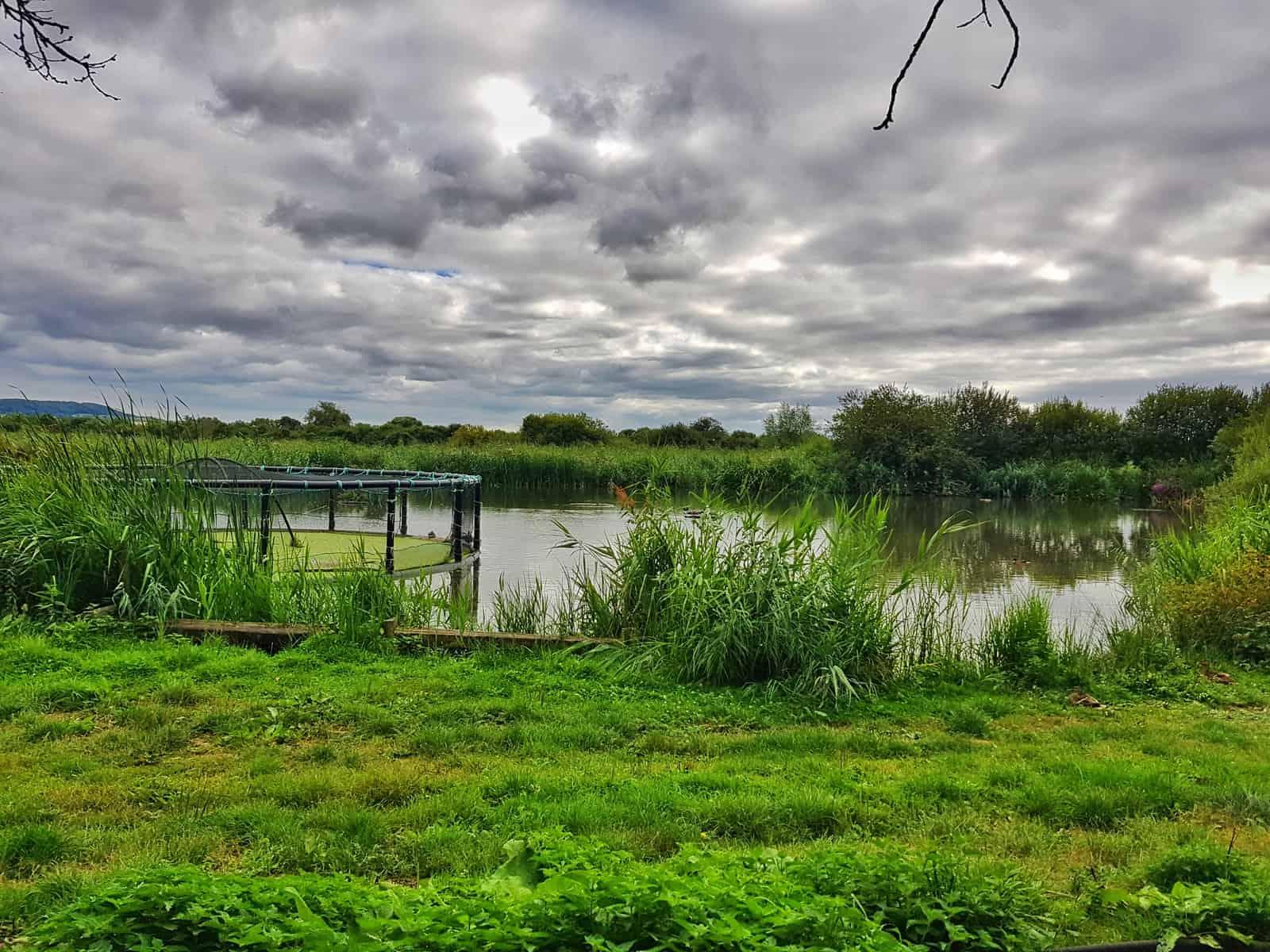 WWT Slimbridge, Gloucestershire - wetlands