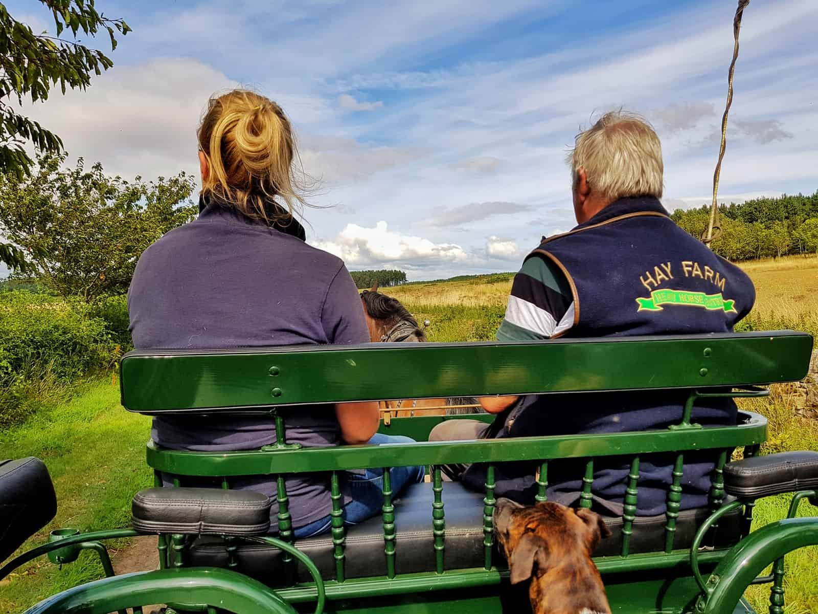 Ford and Etal Hay Farm dog on carriage ride