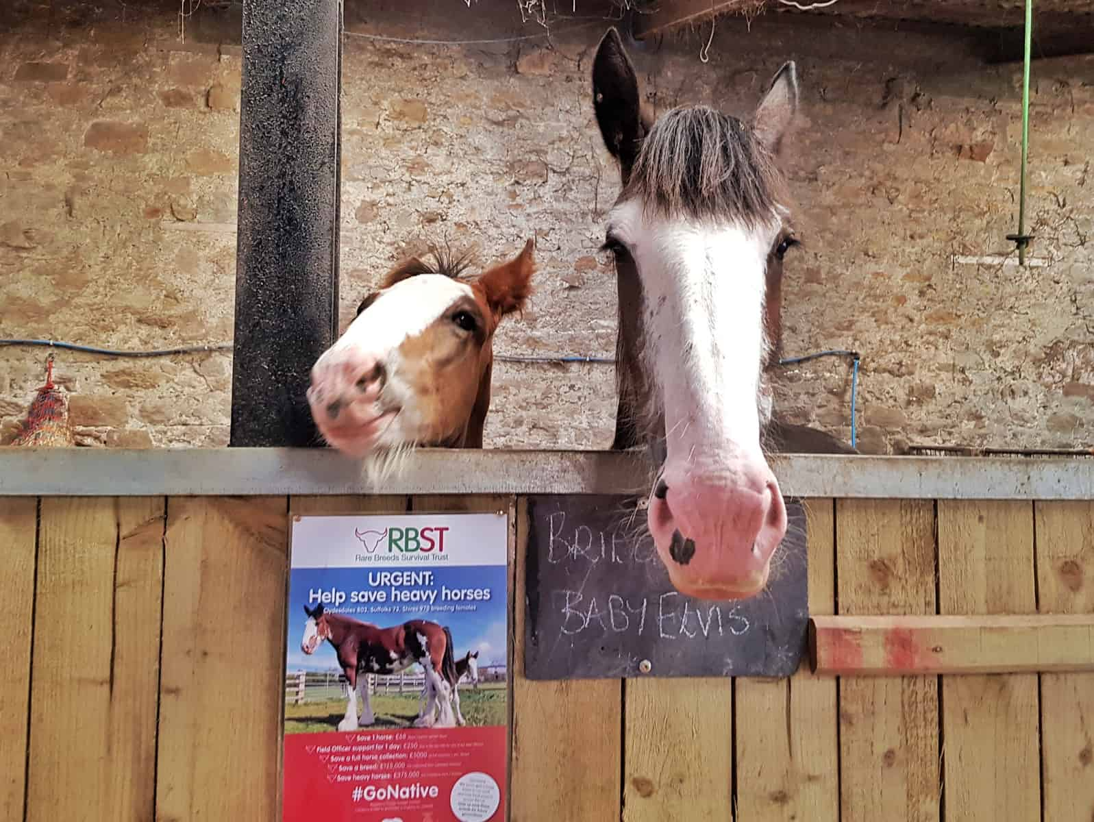 Ford and Etal Hay Farm horse and foal