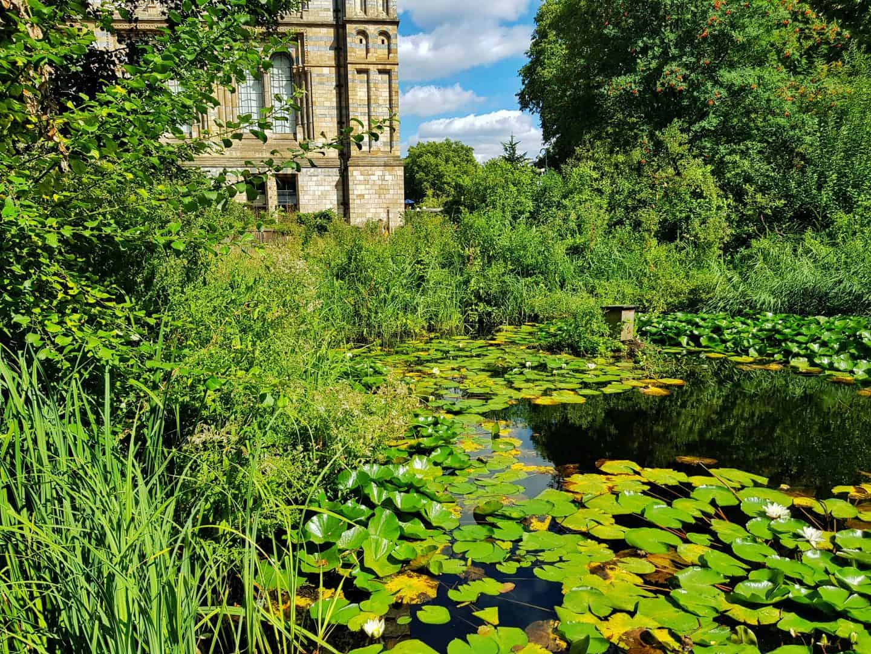 London Natural History Museum Wildlife Garden pond