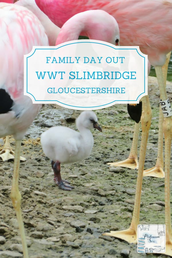 WWT Slimbridge, Gloucestershire | The Wildfowl and Wetland Trust at Slimbridge in Gloucestershire is a brilliant day out for the whole family. There are few attractions that are equally as interesting for adults and children alike but this is one of them. From ducks, geese and swans to flamingos, otters and giant LEGO sculptures, children of all ages will be entertained. Parents will love the bird hides and the fascinating wetland areas. Keep quiet to see a kingfisher going about its business. #daysout #UKtravel #familyfun #outdoorfun #familytravel #Gloucestershire