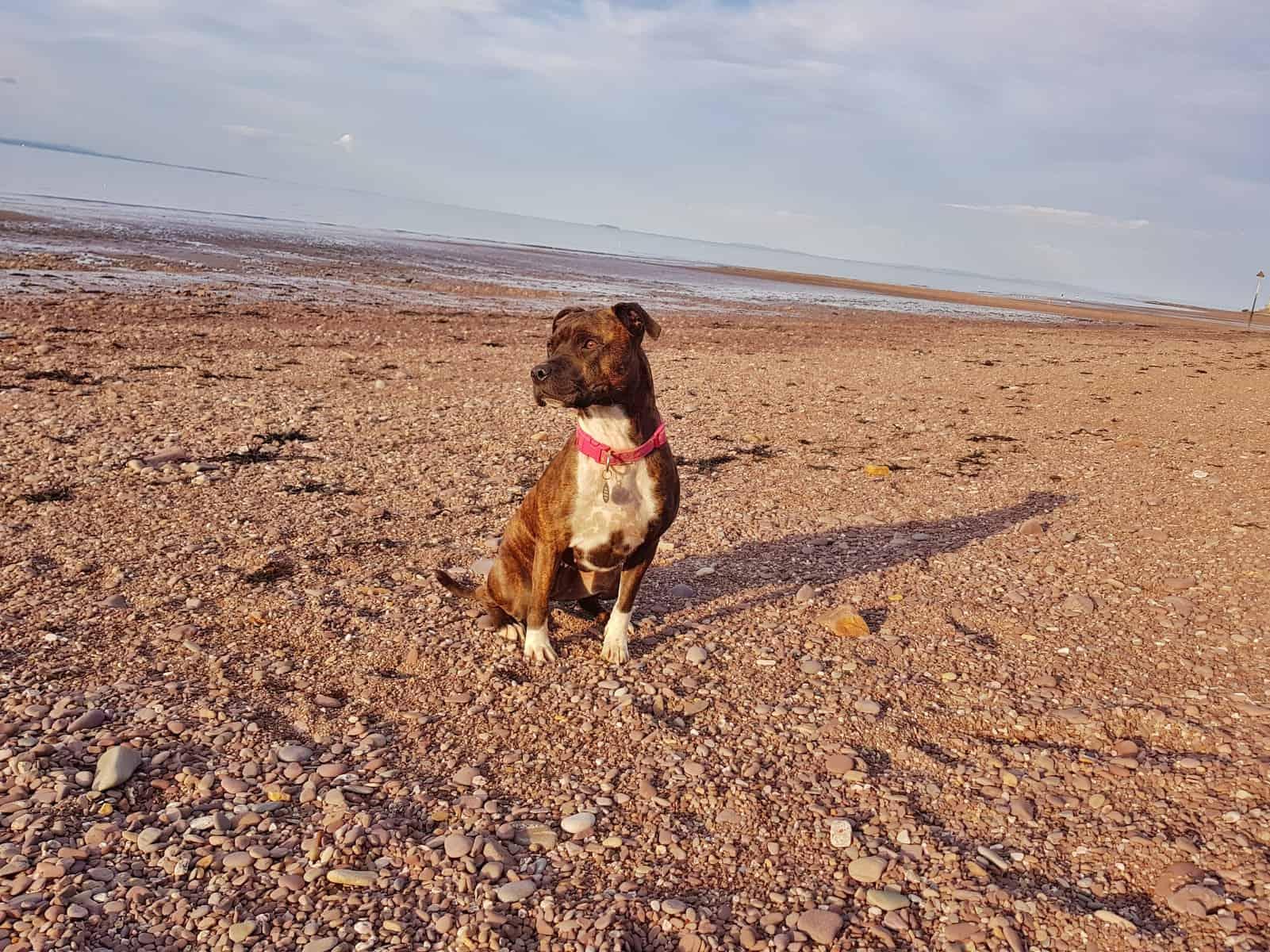 Hoburne Blue Anchor dog on vast expanse of beach