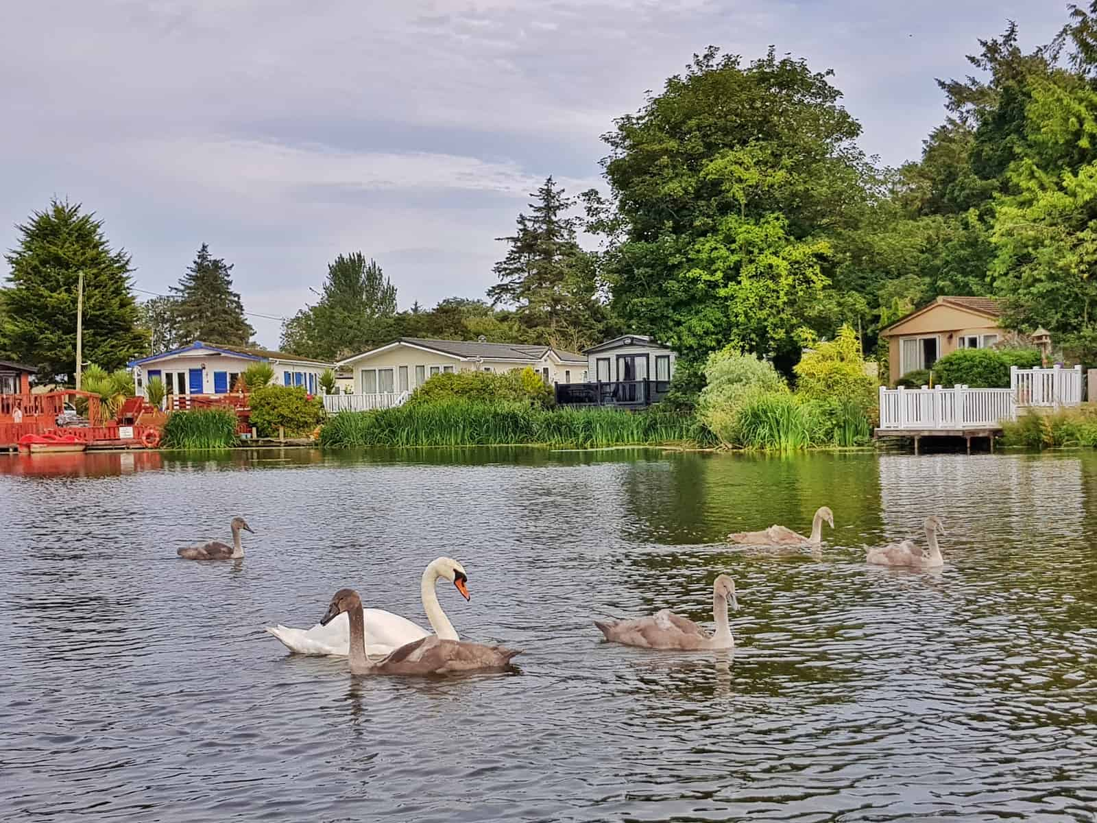 Why Haven holidays are not for us lake with swans on