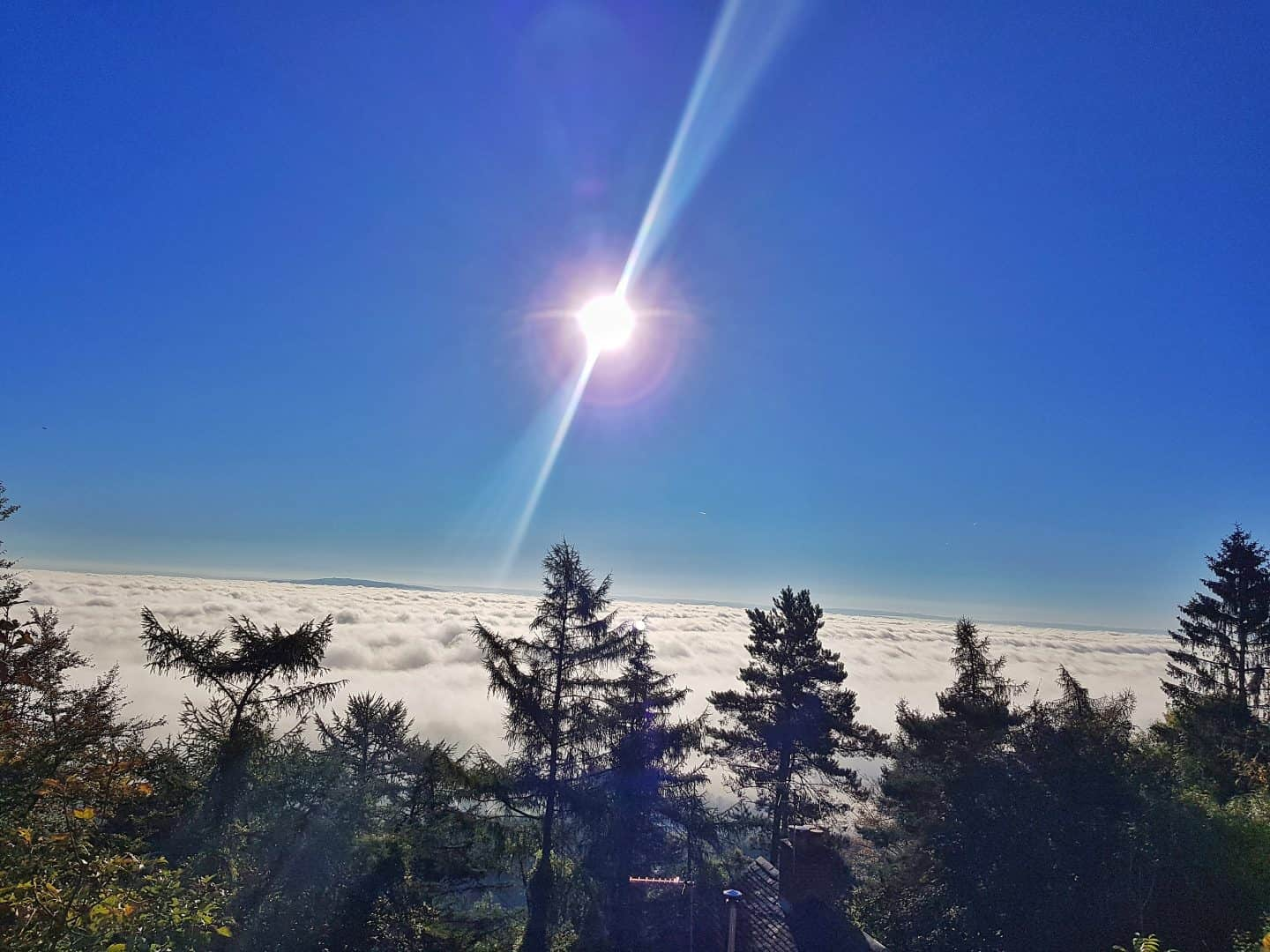 View above the clouds from the Wyche Inn on the Malvern Hills with blue sky, sun in the centre and pine trees in the foreground