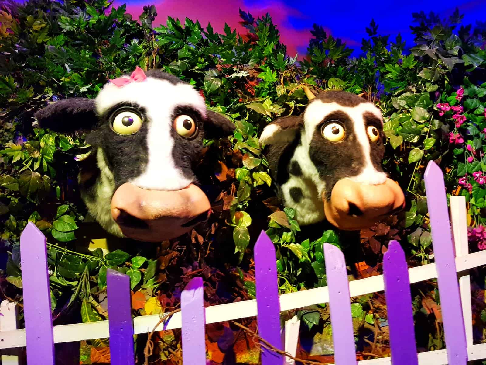 A family day out at Cadbury World Birmingham two cows in Cadavra ride