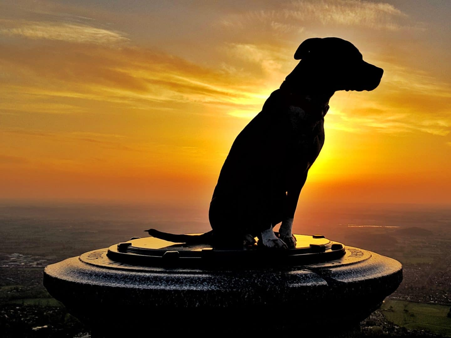 Silhouette of a dog sitting on top of the Worcestershire Beacon at sunset