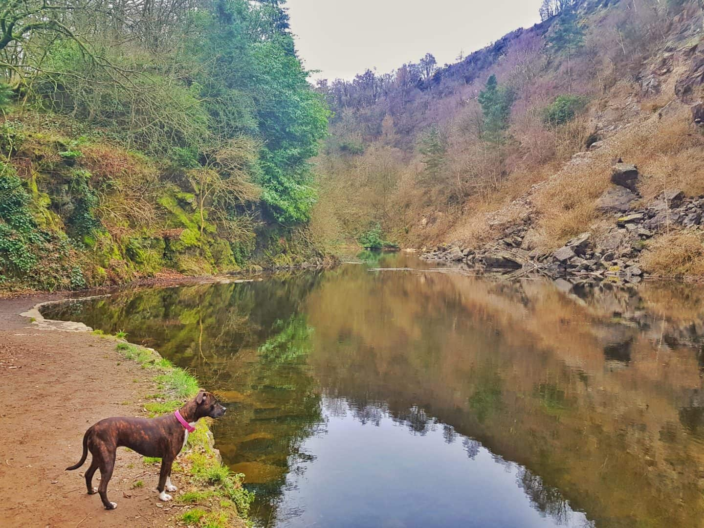 Lake at the bottom of a quarry with steep sides and trees reflected in the water. Dog looking at the water from the left hand side.