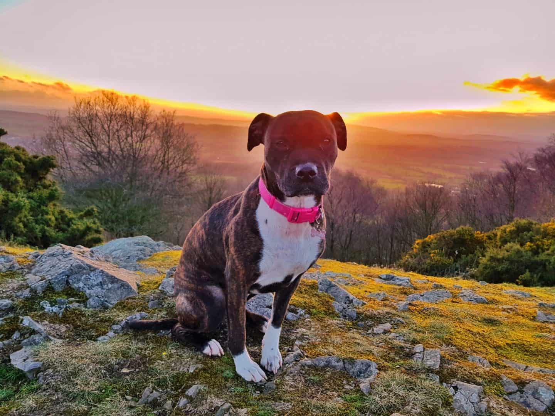 Dog friendly West Midlands dog on Malvern hills