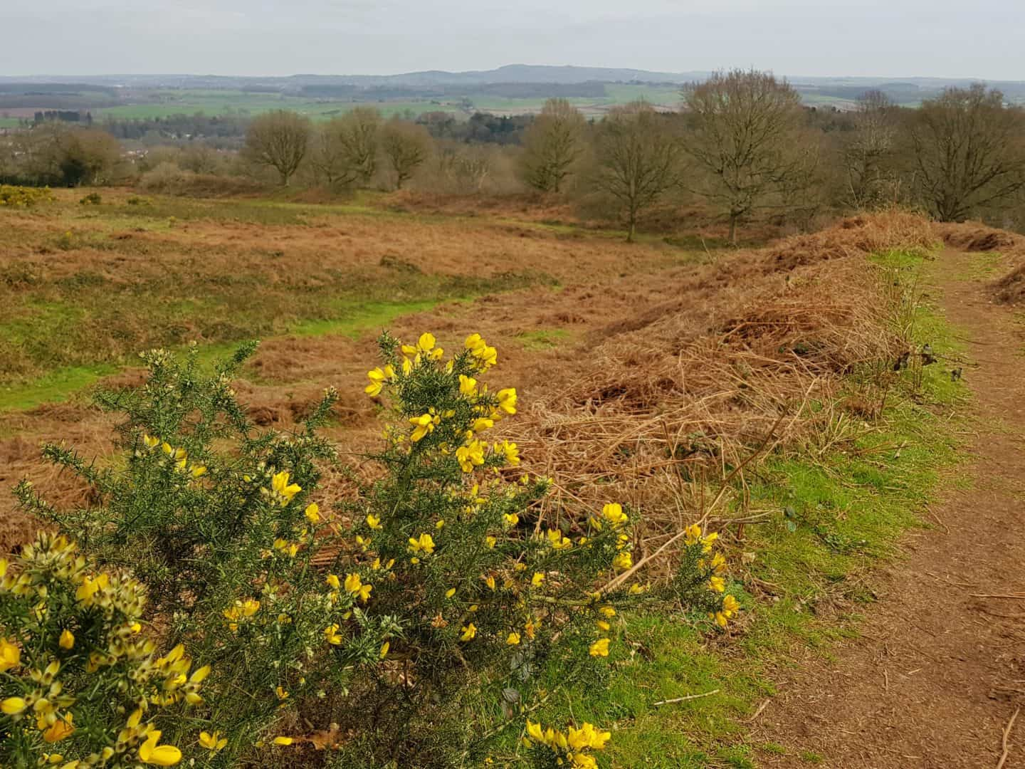 Kinver Edge and the Rock Houses National Trust West Midlands heathland