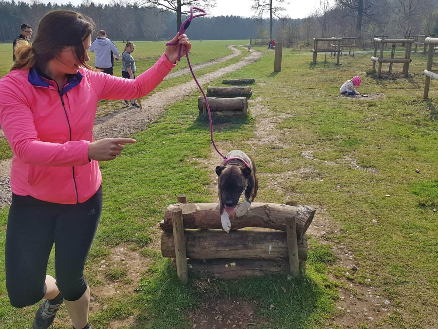 dog activity trail in Cannock Chase Forest Staffordshire West Midlands