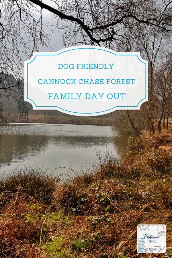 Cannock Chase Forest Staffordshire West Midlands | Mountain bike trails for the whole family, a dog activity area, Go Ape, forests and natural pools make Cannock Chase forest an ideal dog friendly family day out in the West Midlands. It's an ideal place to get outside into the fresh air with the children. #dogfriendly #WestMidlands #daysout #familyfun