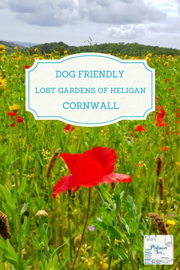 Lost Gardens of Heligan dog friendly family day out in Cornwall, UK. If you are in Cornwall with kids or dogs, the Lost Gardens of Heligan is a great place to visit. With children's activities taking place during school holidays, this is a full day out for the whole family. #UKTravel #dogfriendly #daysout #familyfun #Cornwall #visitCornwall