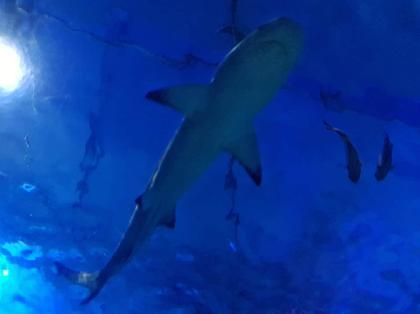 A shark at the National Sea Life Centre