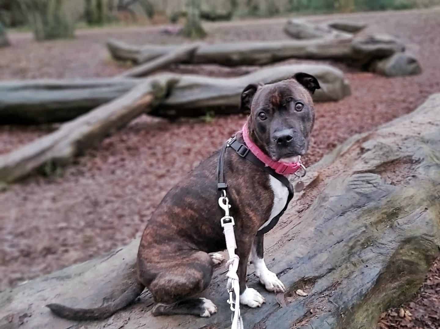 Dog sitting on a log in a natural play area