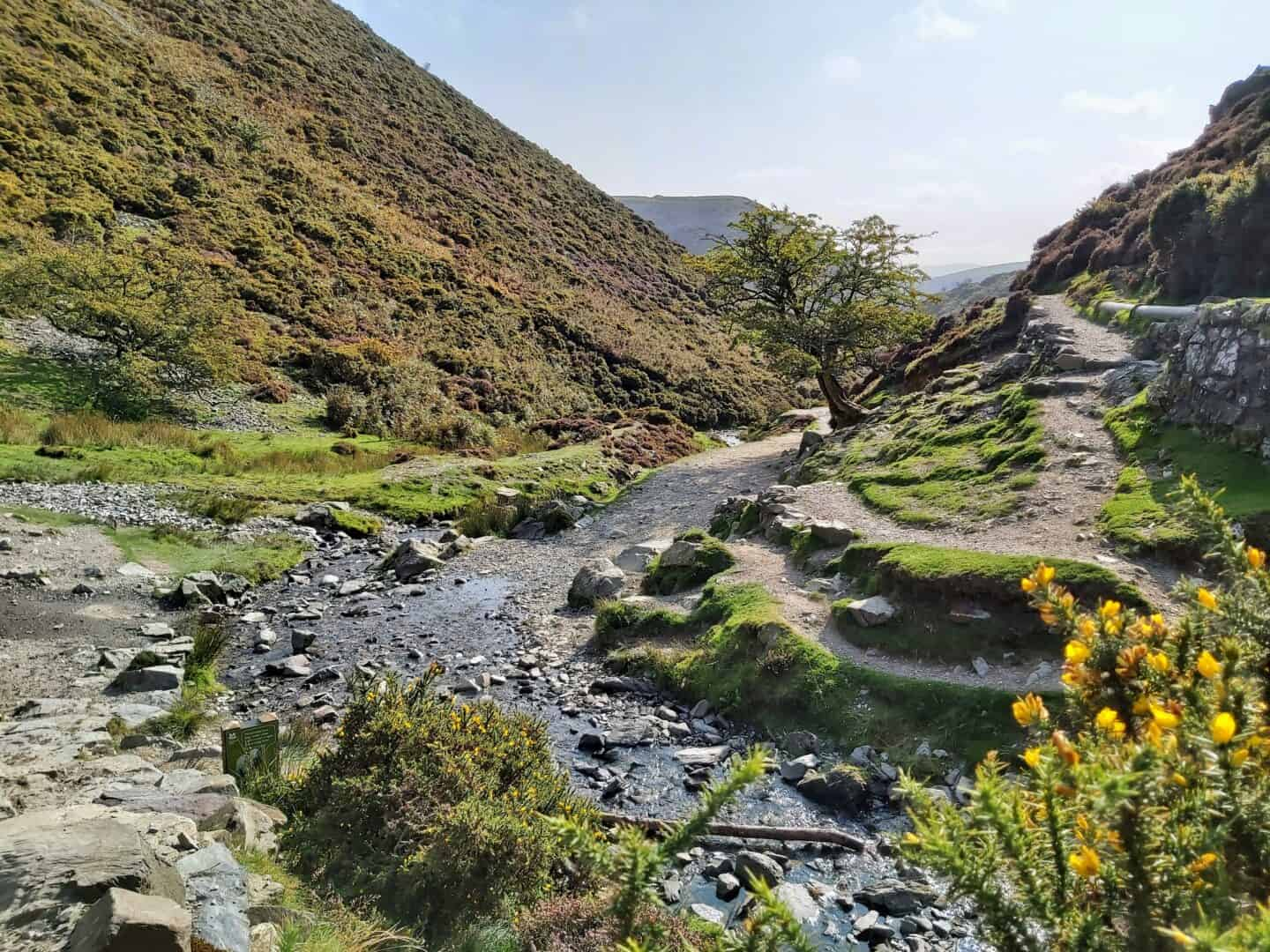 Offroad 1000 mile challenge path. Gorse bush in foreground with yellow flowers. Stream stretches away from it between two hills with another hill in the distance